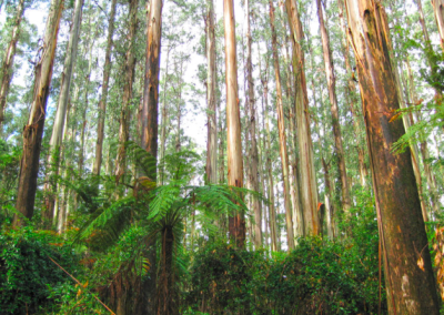 Dandenong Ranges retreat 1